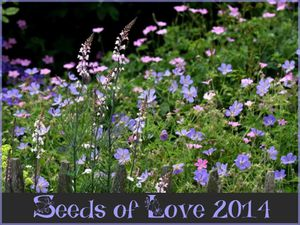 Seeds of Love 2014- Les gagnants !