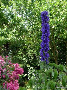 Floraisons estivales :  Focus sur les A,