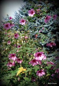 Le Jardin de Geneviève,