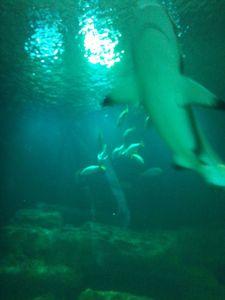 A la rencontre des requins à l'Aquarium de Paris