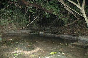 La Forêt Primaire, ingrate pour l'Ornitho