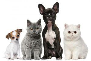 Etude rémunérée sur les soins prodigués aux chiens et chats
