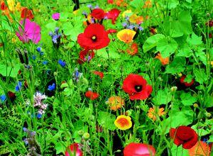 Tendance: Jachère fleurie