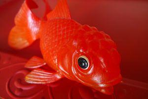 Mon super poisson rouge