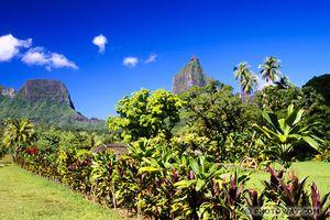 Savon &quot&#x3B;exotique&quot&#x3B; Coco Monoï (coloré aux macérâts naturels)