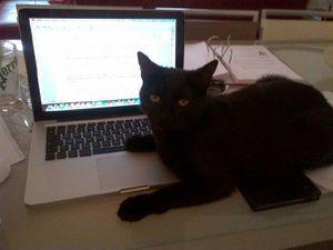 Le chat(on) est un tyran comme un autre ...