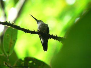 À tous les petits colibris qui se cachent...