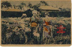 Iris -2090- Carte en bambou. Japonaises ramassant des iris. Japon. 1910.