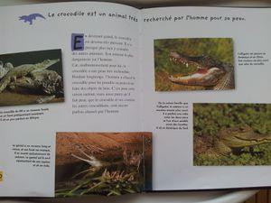 Le petit crocodile. Livre documentaire dès 4 ans. Mango jeunesse.