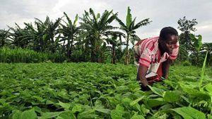 RDC : Un nouveau scénario s'écrit au Kivu (Afrikarabia)