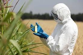 Europe : Pour interdire un OGM, les Etats devront demander la permission aux entreprises (Bastamag)