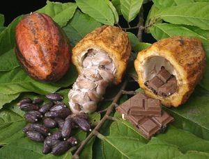 Des opérateurs nationaux en Côte-d'Ivoire dénoncent une mainmise des multinationales sur le cacao (Xinhua)
