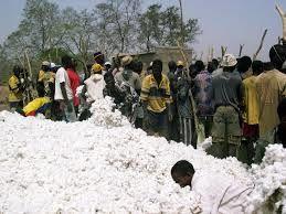 Burkina Faso - Monsanto. La fin de la culture du coton OGM Bt pour 2018 ? (InfOGM)