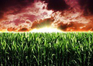 Les pressions de Monsanto sur la Commission européenne (New Eastern Outlook)