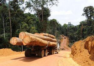 Comment le bois volé au Cameroun est distribué sur les marchés internationaux (Camer.be)