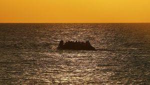 La pêche française sauvée par les migrants (Le Canard enchaîné)
