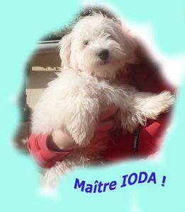 MAITRE IODA