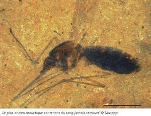Une éternité d'insectes