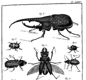Diderot et les insectes