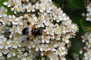 Rappel : le concours photo « Insectes de France » de L'Agrion de l'Oise