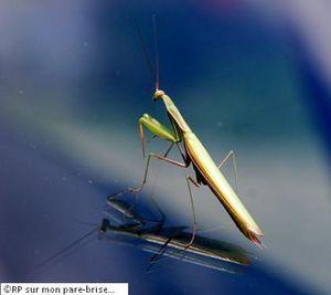S'inspirer du déplacement des insectes