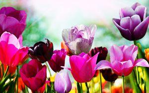 De Florii - Ioana Dragusin