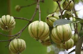 A short description of garcinia cambogia