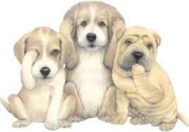 Les normes du MAPAQ en élevage canin
