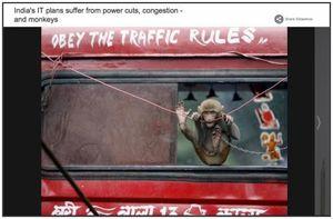 Inde : les singes aiment (trop) la fibre optique