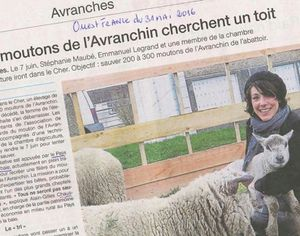 &quot&#x3B;Adopte une avranchine&quot&#x3B; : notre mission associative
