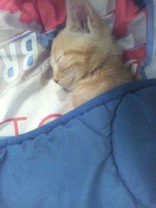 La belle histoire d'un petit chat roux