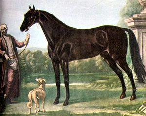 Le turcoman, le cheval de selle turque à l'origine du pur-sang anglais