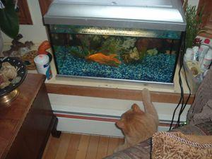 Oliver Twist et le poisson rouge, ils sont morts dans la même année, Lestate en mai Oliver en décembre ...