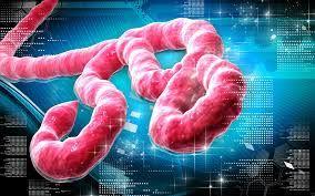 Les laboratoires US en Afrique de l'Ouest et Ebola
