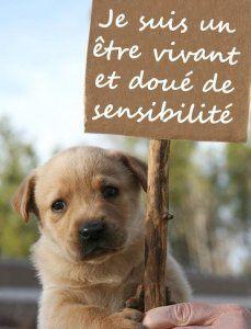 Les animaux sont désormais des êtres vivants doués de sensibilité: l'article 515-14 du code civil est officiellement publié ce 17 février 2015