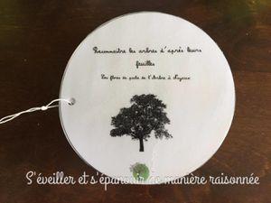 En forêt : reconnaître les arbres d'après leurs feuilles