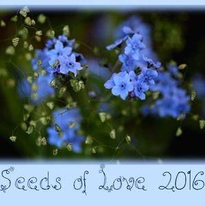 Merci aux seedlovers - Nathalie d'Auvergne