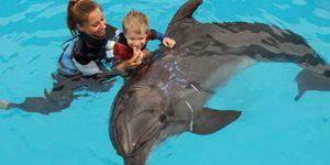 La delphinothérapie, une thérapie assistée par les dauphins pour les enfants ou les adultes en difficultés