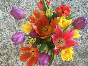La photo de la semaine : Tulipes