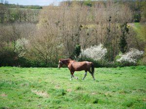 Un cheval en son royaume....