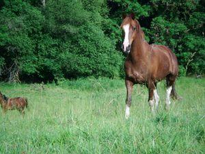 Cheval dans les hautes herbes!