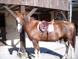 exercices travail rectitude cheval