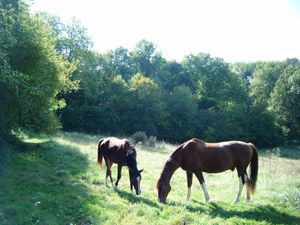 cheval et chat
