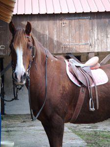Travail du cheval au pas