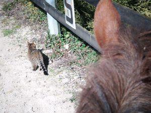 cherchez le chat!