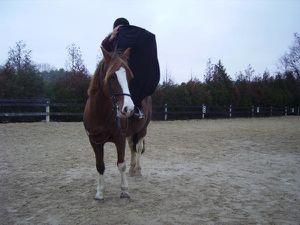 Apprendre la monte en amazone à un cheval