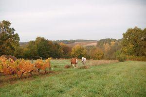 Chevaux aux couleurs de l'automne