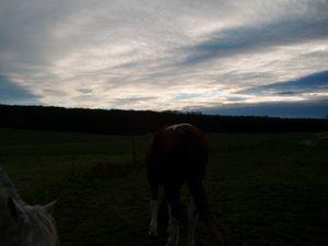 chevaux au soleil couchant....