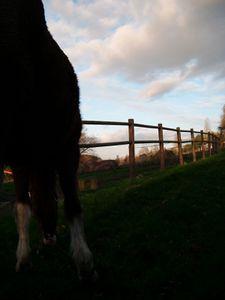 cheval en soirée....