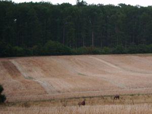 Au milieu des champs...